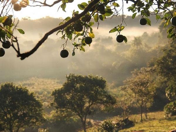 Urwald in Paraguay Abholzung für Autoleder