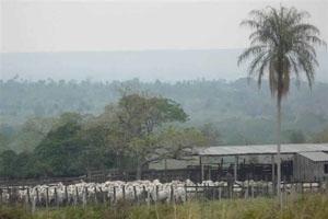 Der Norden Paraguays  -  Estancias und Guerilla