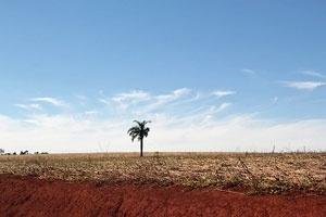 Bericht zur Lage in Paraguay